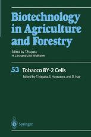 Tobacco BY-2 Cells