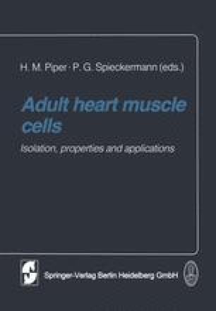 Adult heart muscle cells