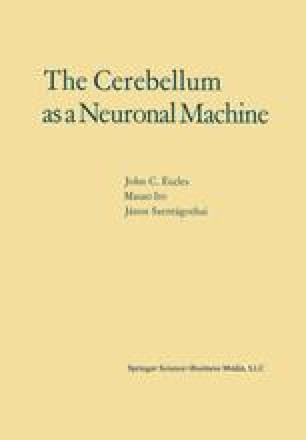 The Cerebellum as a Neuronal Machine