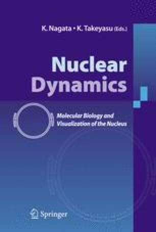 Nuclear Dynamics