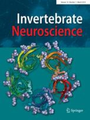 Cephalopods in neuroscience: regulations, research and the
