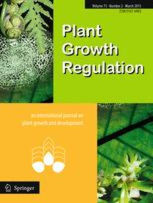 The influence of Si-rich mineral zeolite on the growth