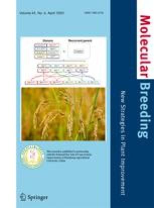 Development of genetically modified wheat to assess its