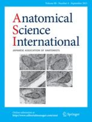 Anatomy of the ansa cervicalis: Nerve fiber analysis | SpringerLink