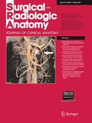 Radiologic anatomy of the superior mesenteric vein and branching ...