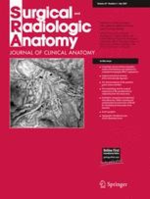 Enchanting Surgical Radiologic Anatomy Photos - Image of internal ...