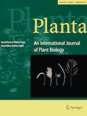 Transcriptional network regulation of the brassinosteroid