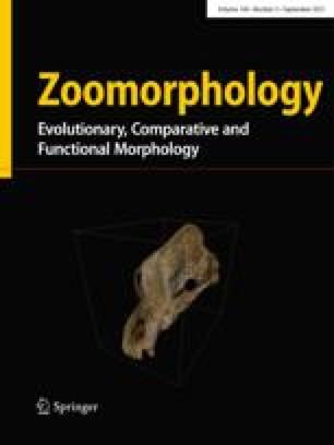 Zeitschrift für Morphologie und Ökologie der Tiere