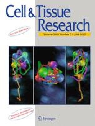 Zeitschrift für Zellforschung und Mikroskopische Anatomie
