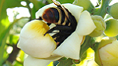 Insect Pollinators Call for Papers
