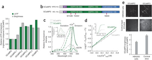In vitro characterization of GCaMP3.