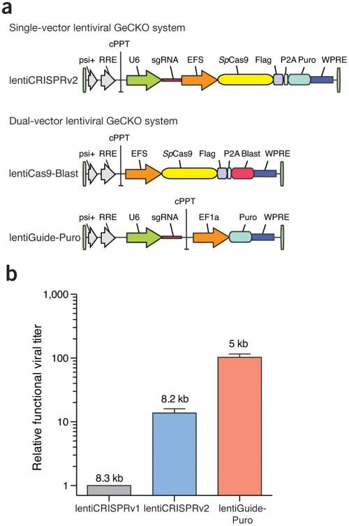 CRISPR lentiviral vectors with higher functional titer.