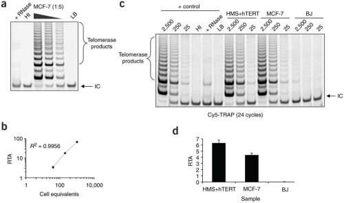 Analysis of telomerase activity using Cy5-TRAP.