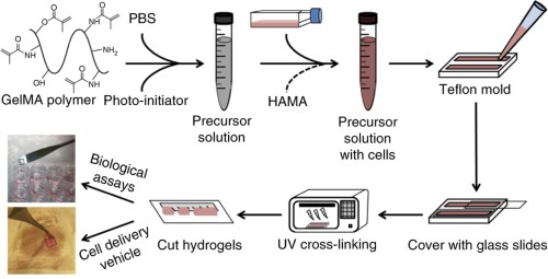 Overview of the GelMA-based hydrogel preparation protocol.