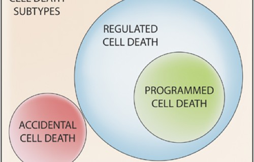 Essential Versus Accessory Aspects Of Cell Death Recommendations Of The Nccd 2015 Cell Death Differentiation