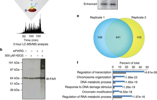 Proteome-wide identification of the endogenous ADP