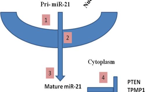 Micro RNAs