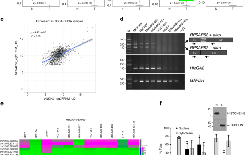 The transcribed pseudogene RPSAP52 enhances the oncofetal