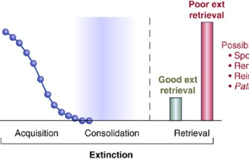 Neural Mechanisms of Extinction Learning and Retrieval ... on