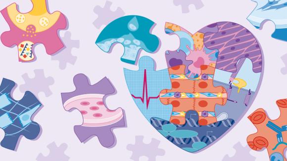 Cardiac development and regeneration