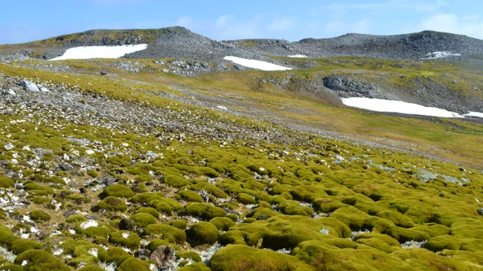 Moss samples collected from Ardley Island and other sites on the Antarctic Peninsula showed increasing moss growth due to rising temperatures.