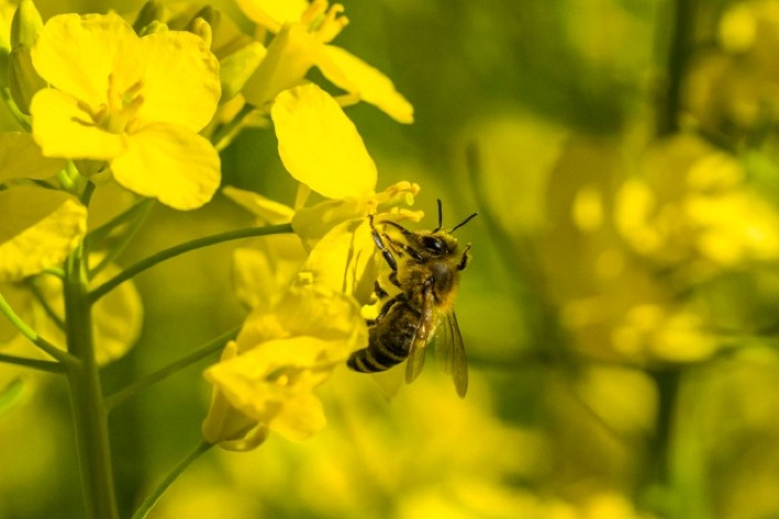 Bees are harmed by neonicotinoid pesticides, according to a large-scale field study.